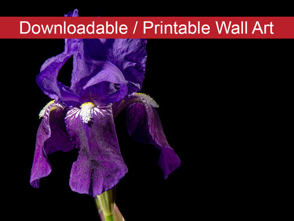 Digital Wall Art, Downloadable Print, Floral Nature Photo Iris on Black Wall Decor Instant -DIY Printable