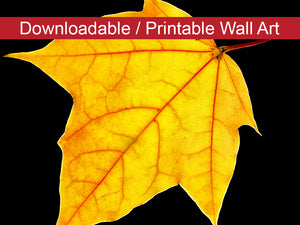 Digital Wall Art, Downloadable Prints, Nature Photography - Brilliant Yellow - Autumn Leaf - Wall Decor Instant Download Print - Printable