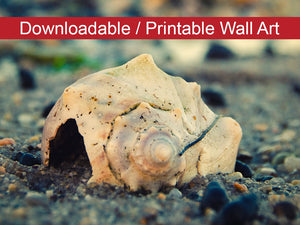 Digital Wall Art, Downloadable Print, Coastal Nature Photo Shell at Bowers 2 Wall Decor Instant -DIY Printable