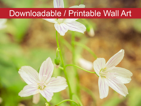 Tranquil Carolina Spring Beauty DIY Wall Decor Instant Download Print - Printable Wall Art
