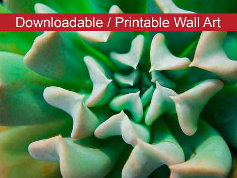 Succulent DIY Wall Decor Instant Download Print - Printable Wall Art