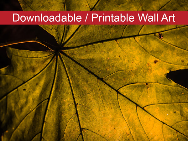Digital Wall Art, Downloadable Print, Botanical Nature Photo Seasons Change Wall Decor Instant -DIY Printable - PIPAFINEART