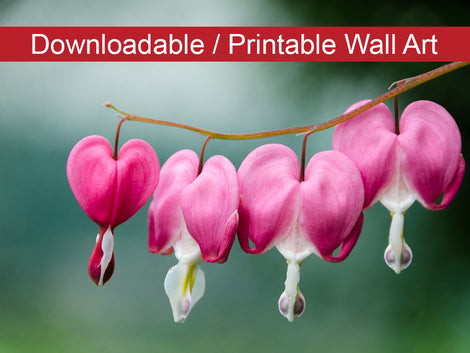 Be Still My Bleeding Heart Floral Nature Photo DIY Wall Decor Instant Download Print - Printable
