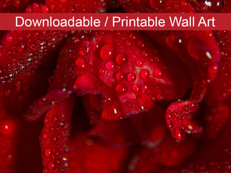 Royal Red Rose DIY Wall Decor Instant Download Print - Printable Wall Art