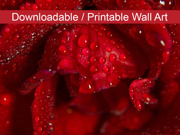 Digital Wall Art, Downloadable Print, Floral Nature Photo Royal Red Rose Wall Decor Instant -DIY Printable