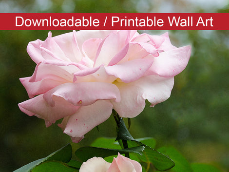 Admiration Floral Nature Photo DIY Wall Decor Instant Download Print - Printable