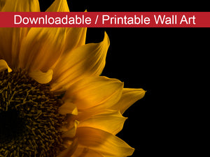 Digital Wall Art, Downloadable Print, Floral Nature Photo Sunflower in Corner Wall Decor Instant -DIY Printable