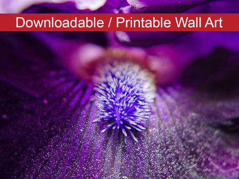 Eye of Iris Floral Nature Photo DIY Wall Decor Instant Download Print - Printable