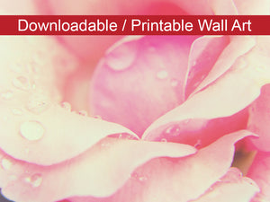 Digital Wall Art, Downloadable Print, Floral Nature Photo Softened Rose Wall Decor Instant -DIY Printable