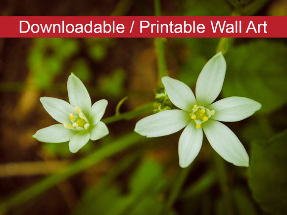 Digital Wall Art, Downloadable Print, Floral Nature Photo Wild Beauty Wall Decor Instant -DIY Printable