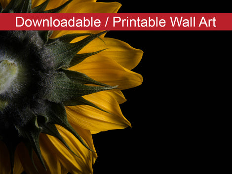 Backside of Sunflower Floral Nature Photo DIY Wall Decor Instant Download Print - Printable
