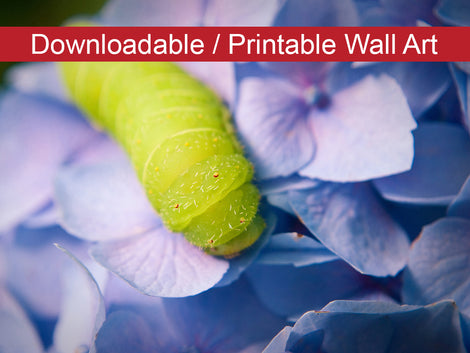 Actias Luna Larva on Hydrangea Floral Nature Photo DIY Wall Decor Instant Download Print - Printable