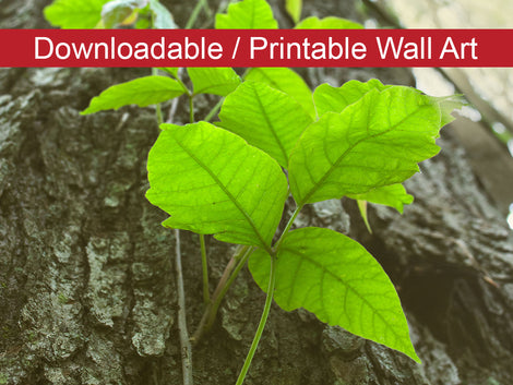Climbing the Tree Botanical Nature Photo DIY Wall Decor Instant Download Print - Printable