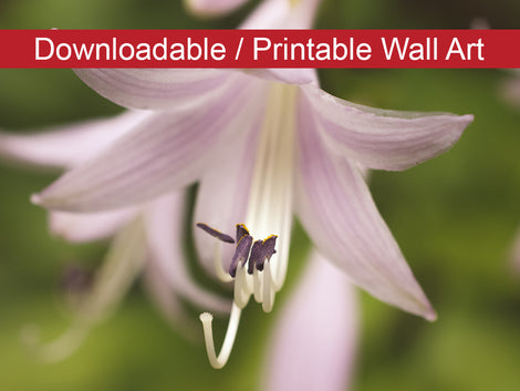 Softened Hosta Bloom DIY Wall Decor Instant Download Print - Printable Wall Art