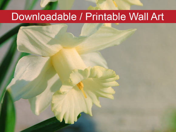 Digital Wall Art, Downloadable Prints, Floral Nature Photograph Colorized Daffodils - Wall Decor Instant Download Print - Printable