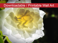 Glowing Rose 2 Floral Nature Photo DIY Wall Decor Instant Download Print - Printable  - PIPAFINEART