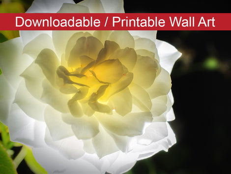 Glowing Rose 2 Floral Nature Photo DIY Wall Decor Instant Download Print - Printable