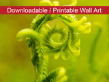Digital Wall Art, Downloadable Print, Botanical Nature Photo Nature's Perfection Wall Decor Instant -DIY Printable