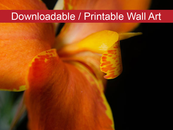 Digital Wall Art, Downloadable Print, Floral Nature Photo Orange Canna at Longwood Gardens Wall Decor Instant -DIY Printable