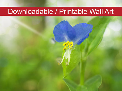 Asiatic Day Flower Floral Nature Photo DIY Wall Decor Instant Download Print - Printable