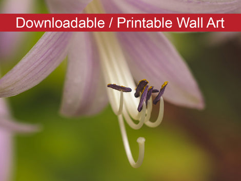 Close-up Hosta Bloom Floral Nature Photo DIY Wall Decor Instant Download Print - Printable