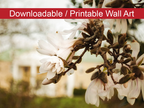 Bellevue Mansion Floral Nature Photo DIY Wall Decor Instant Download Print - Printable