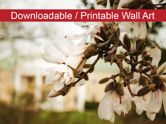 Digital Wall Art, Downloadable Prints, Floral Nature Photograph Bellevue Mansion - Wall Decor Instant Download Print - Printable