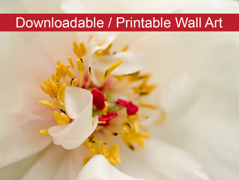 Eye of Peony Floral Nature Photo DIY Wall Decor Instant Download Print - Printable