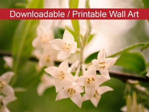 Digital Wall Art, Downloadable Prints, Floral Nature Photograph Floral Tranquility - Wall Decor Instant Download Print - Printable
