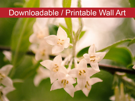 Floral Tranquility Floral Nature Photo DIY Wall Decor Instant Download Print - Printable