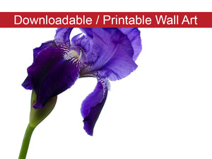 Digital Wall Art, Downloadable Print, Floral Nature Photo Iris on White Wall Decor Instant -DIY Printable