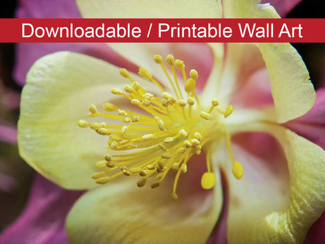 Delicate Columbine Floral Nature Photo DIY Wall Decor Instant Download Print - Printable