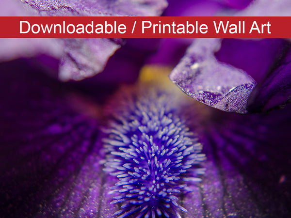 Digital Wall Art, Downloadable Print, Floral Nature Photo Stigma of Iris Wall Decor Instant -DIY Printable - PIPAFINEART