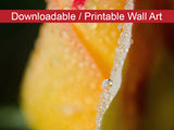 Digital Wall Art, Downloadable Prints, Floral Nature Photograph Dew on Yellow Rose - Wall Decor Instant Download Print - Printable