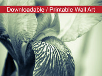 Abstract Japanese Iris Delight Floral Nature Photo DIY Wall Decor Instant Download Print - Printable  - PIPAFINEART