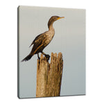 Double Crested Cormorant Animal / Wildlife Photograph Fine Art Canvas & Unframed Wall Art Prints  - PIPAFINEART