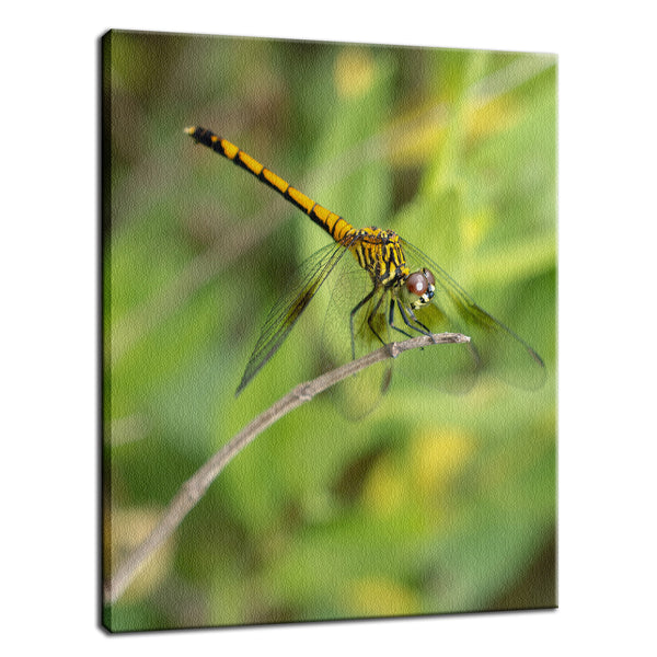 Dragonfly Animal / Wildlife Photograph Fine Art Canvas & Unframed Wall Art Prints  - PIPAFINEART
