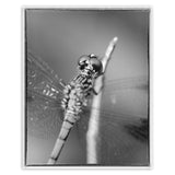 Dragonfly at Bombay Hook in Black and White Animal / Wildlife Photograph Fine Art Canvas & Unframed Wall Art Prints  - PIPAFINEART
