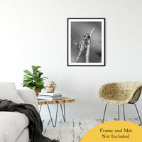 "Dragonfly at Bombay Hook in Black and White Animal / Wildlife Photograph Fine Art Canvas & Unframed Wall Art Prints 24"" x 36"" / Classic Paper - Unframed - PIPAFINEART"