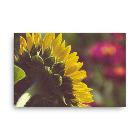 Dramatic Backside of Sunflower Floral Nature Canvas Wall Art Prints