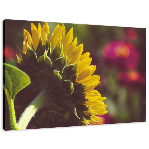 Dramatic Backside of Sunflower Grain - Merlot Effect Nature Photography Wall Art Prints Unframed and Fine Art Canvas Prints - PIPAFINEART
