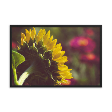 Dramatic Backside of Sunflower Grain Floral Photo Framed Wall Art Print