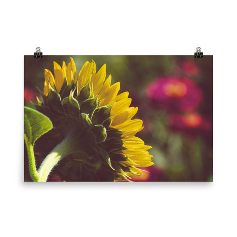Dramatic Backside of Sunflower Grain Floral Nature Photo Loose Unframed Wall Art Prints