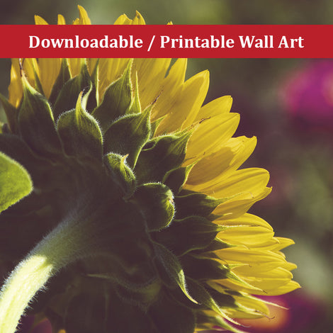 Dramatic Backside of Sunflower Floral Nature Photo DIY Wall Decor Instant Download Print - Printable