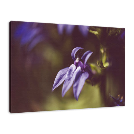 Dramatic Blue Lobelia, Blue Cardinal Flower Nature Photo Fine Art Canvas Wall Art Prints