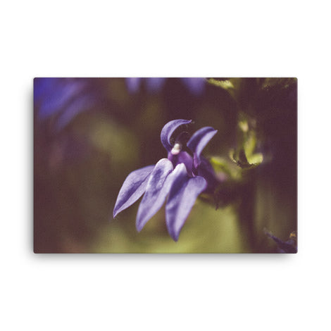 Dramatic Blue Lobelia Floral Nature Canvas Wall Art Prints