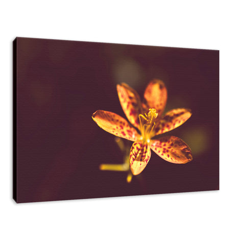 Dramatic Orange Leopard Lily Flower Nature / Floral Photo Fine Art Canvas Wall Art Prints