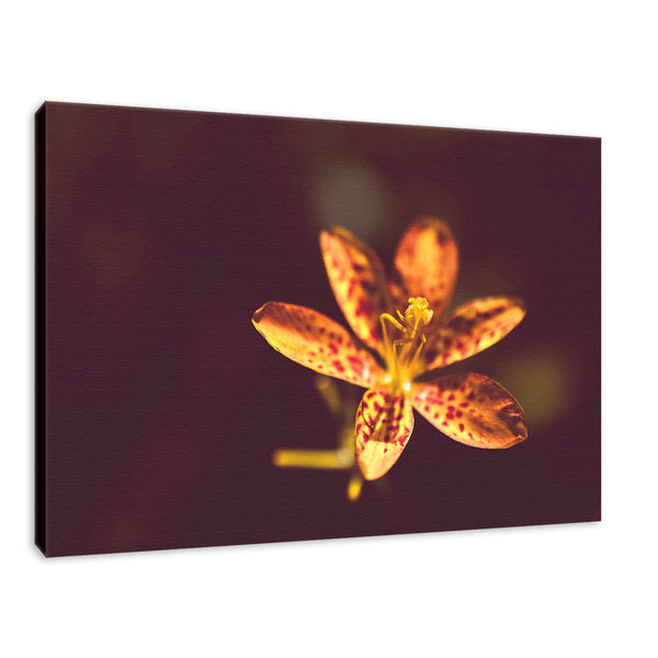 Dramatic Orange Leopard Lily Flower Nature Photography Wall Art Prints Unframed and Fine Art Canvas Prints - PIPAFINEART