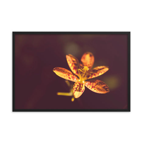 Dramatic Orange Leopard Lily Flower Floral Nature Photo Framed Wall Art Print