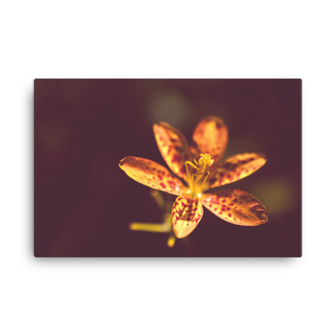 Dramatic Orange Leopard Lily Flower Floral Nature Canvas Wall Art Prints